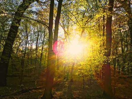 Paysage forestier de printemps au coucher ou au lever du soleil, nature et environnement
