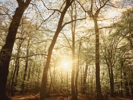 Spring forest landscape at sunset or sunrise, nature and environment Reklamní fotografie
