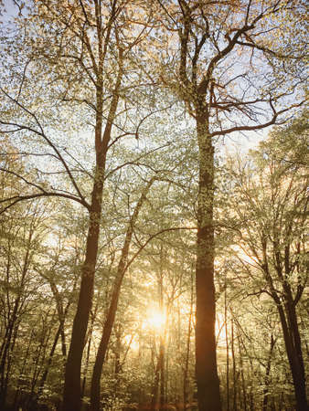 Spring forest landscape at sunset or sunrise, nature and environment