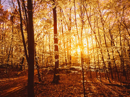 Autumn forest landscape at sunset or sunrise, nature and environment