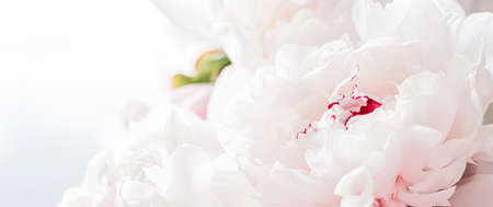 Bouquet of peony flowers as luxury floral background, wedding decoration and event branding design Standard-Bild