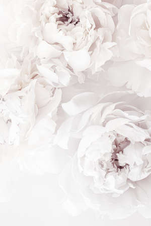 Pure white peony flowers as floral art background, wedding decor and luxury branding design