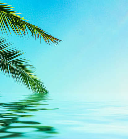 Palm tree leaves and sea water, summertime travel and beach background
