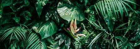 Tropical leaves as nature and environmental background, botanical garden and floral backdrop, plant growth and landscape design