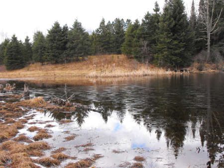 icey: Icey Pond