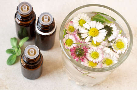 marguerite: Les huiles essentielles et des herbes Banque d'images