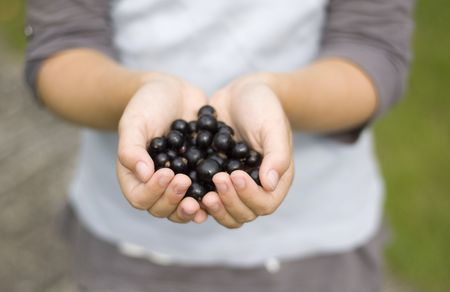 A child holding out blackcurrants in her cupped hands. Soft focus, most of the photo is out of focus