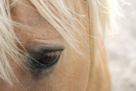 A macro shot of a horse, showing mainly its eye. Soft focus, space for text Stock Photo