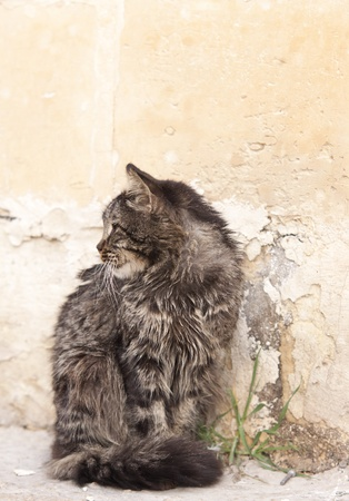 looking away from camera: Domestic cat sitting on the pavement. Looking away from camera. Space for text Stock Photo