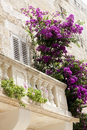 Un balcón romántico de edad en el mediterráneo, con buganvillas moradas y rosadas Climping en la barandilla
