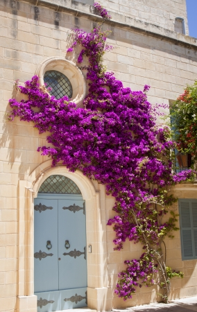 A stone house facade wtih a blue door and a pink bougainvilla climbing up the wall Stock Photo