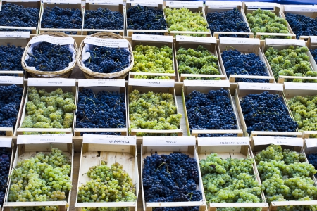 winemaking: A table of black and green grapes in baskets at a wine fair in Lake Garda district, Italy, Europe
