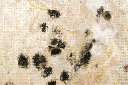 Stains of black mold. Fungus on the old wall. Close-up. Horizontal rectangular photo.