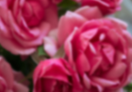 Cute rectangular horizontal blurry background with rose buds.