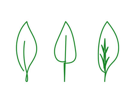 Set of leaves drawn by hand with continuous lines. Doodle, sketch, scribble. Vector illustration.