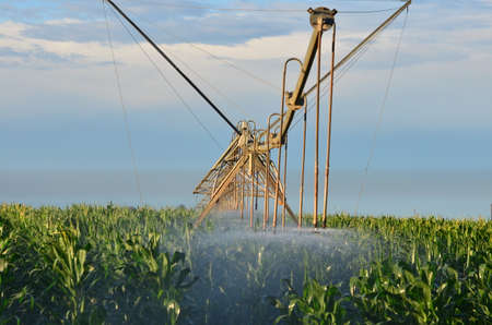 irrigated: Farm land being irrigated with sprayer
