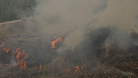Burning Pile of Straw in Garden Stock Photo