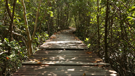 Wooden Dock in Forest - Sunny Path