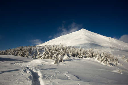 Sunny weather in the mountains of the Carpathians. Blue sky. Pines around, snowy frosty winter. The peak of Petros. Vertex. Stock Photo