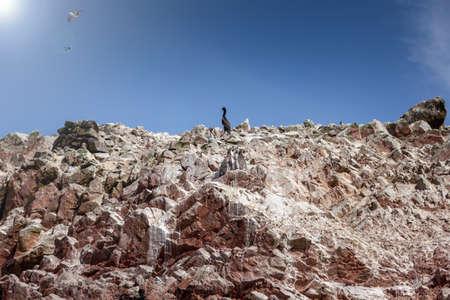 Seabird stands on a rock, penguins stand nearby, Ballestas Islands , Paracas reserve, Peru, Latin America. Stock fotó