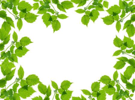 Green plant frame over white background.