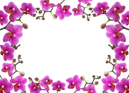 close-up frame of a beautiful orchid on white background photo
