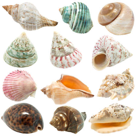 farbe: An image of seashells on white background