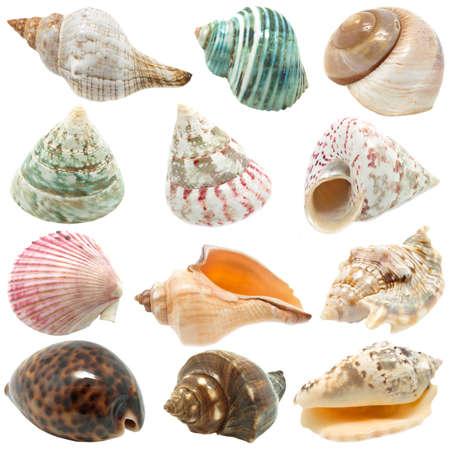Ein Bild von Muscheln auf weißem Hintergrund Standard-Bild