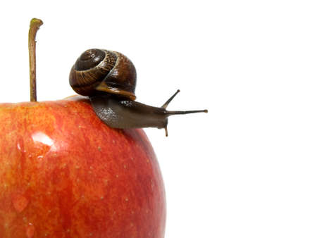 apple snail: snail creep on a red apple on white background. Stock Photo