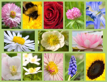 primula: set flowers (rose,clover,sunflower,bluebells,lilac,camomile,daisies,dandelion,primula) Stock Photo