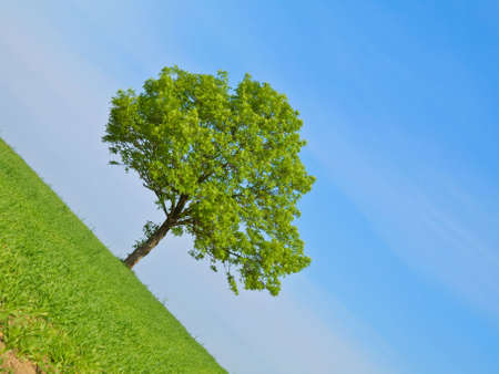 Spring landscape - green tree on the blue sky Stock Photo - 4997733