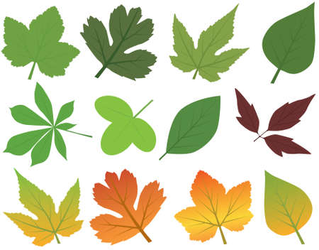 Vector Leaf Collection Vector