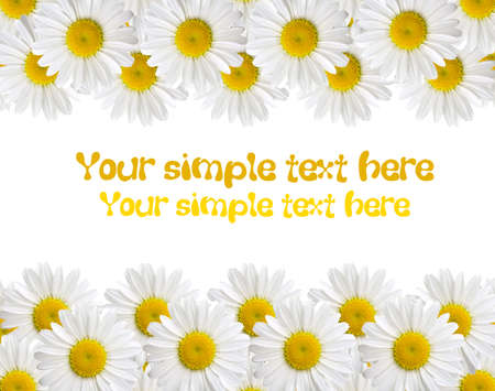 camomile isolated on white background with with room for text Stock Photo - 6200047