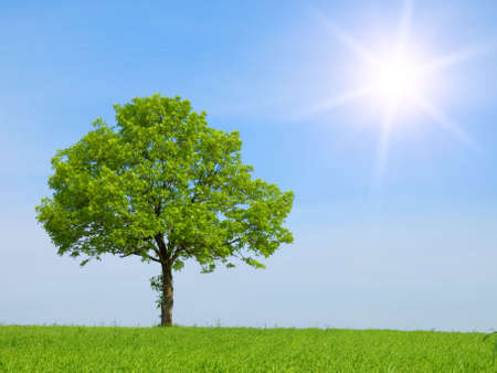 Spring landscape - green tree on the blue sky  photo