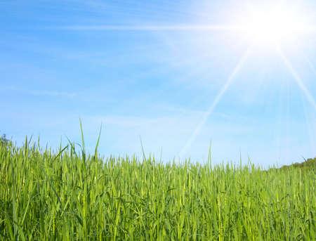 Groen veld op de blauwe hemel