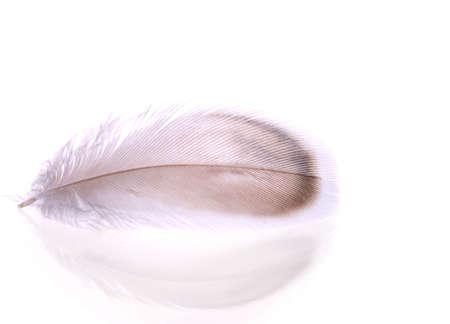 feather isolated on white background  photo