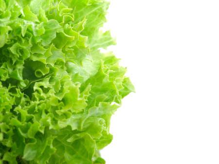 Fresh lettuce leaves isolated on white background  photo