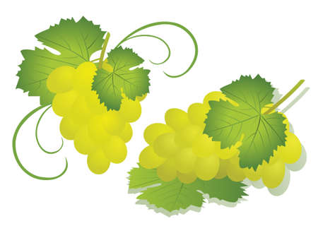 Grape isolated on white Stock Vector - 7451118
