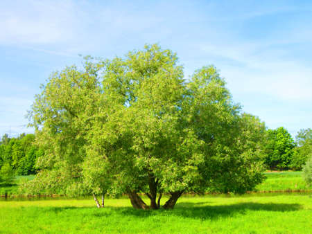 Spring landscape - green tree Stock Photo - 7542743