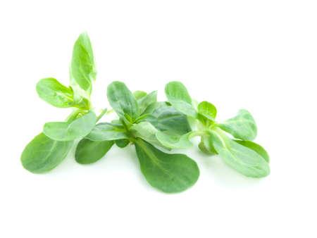 cornsalad: fresh salad isolated on the white background  Stock Photo