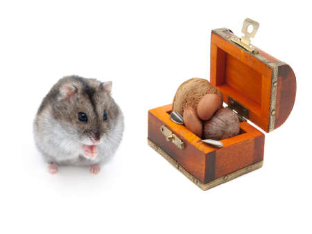 dwarf hamster: Dwarf hamster with feed on white background