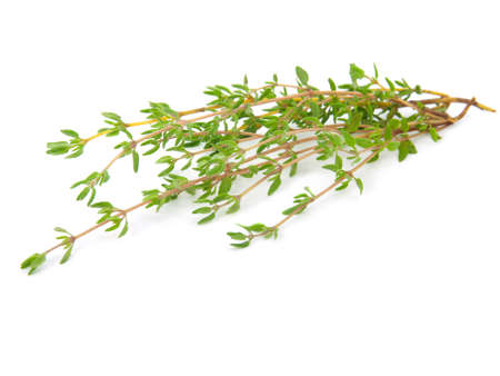 twig: thyme on white isolated background