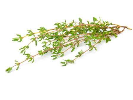 thyme on white isolated background Stock Photo