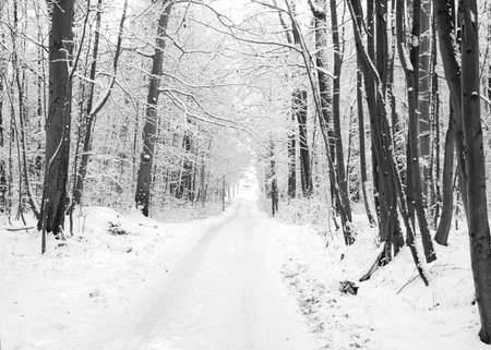 Winter road to wood. The trees covered with snow  Stock Photo - 8243006