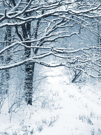 The trees covered with snow Stock Photo - 8243113