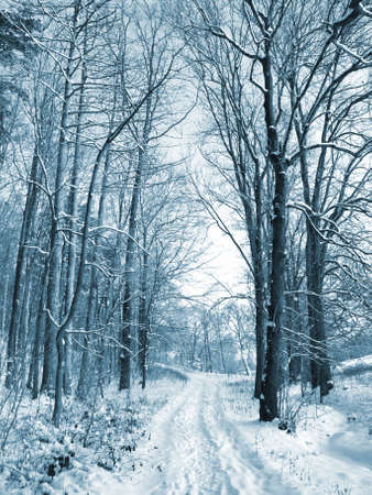 Winter road to wood. The trees covered with snow Stock Photo - 8243117