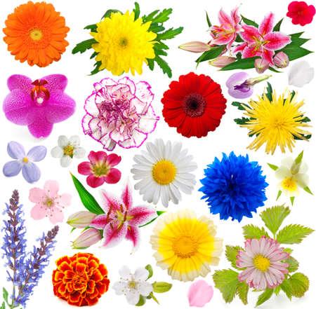 set of flowers  photo