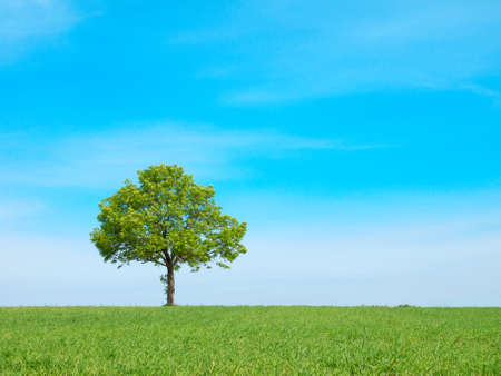 prairie: Spring landscape - green tree on the blue sky