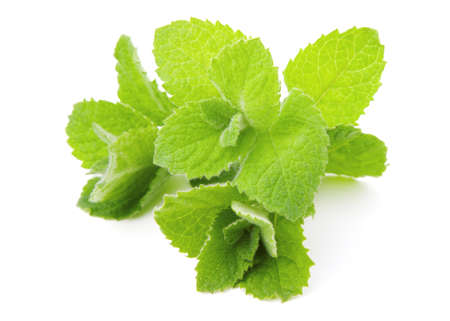 Mint, isolated on white background photo