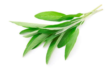 seasonings: green leaves of sage, isolated on white background